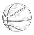 sketch of a basketball ball vector image