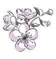 blooming cherry sakura branch with flower buds vector image vector image