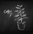 chalk drawn sketch coffee tree vector image