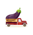 farming crop concept with big ripe eggplant in vector image vector image