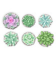 set of succulents in pots echeveria jade plant vector image