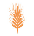 silhouette healthy wheat organ plant nutricious vector image vector image