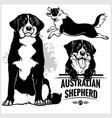 australian shepherd dog - set isolated