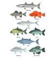 cartoon of freshwater and ocean vector image vector image