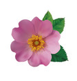 dog rose hip vector image vector image