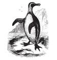 jackass penguin vintage vector image vector image