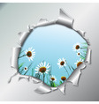 chamomiles in metallic hole vector image vector image