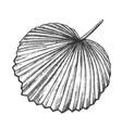licuala grandis tropical exotic leaf retro vector image vector image