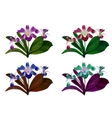 orchid flower with green leaves on white vector image vector image
