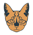 Kitten muzzle vector image vector image