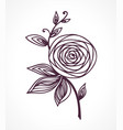 rose stylized flower hand drawing vector image