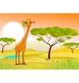 giraffe eating leaves in africa at sunset