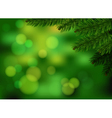 Green fir branch background vector image vector image