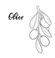 black and white outline olive branch with leaves vector image vector image
