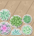 card with succulents in pots echeveria jade vector image vector image