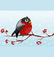 cartoon bullfinch on branch rowan tree vector image