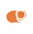 cute cartoon guinea pig vector image vector image
