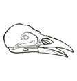 hand drawn skull of a raven vector image vector image