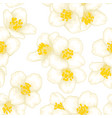 seamless branch white flower jasmine vector image