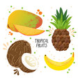 hand draw set of tropical fruits - mango vector image