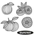 hand drawn grapefruits vector image vector image