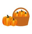 wicker basket filled pumpkin harvesting vector image