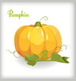 Cartoon pumpkin with leaves vector image