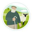 farming today elderly shepherd grazes a flock vector image