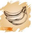 sketch - banana vector image vector image