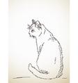 Sketch of cat vector image vector image