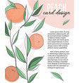 template with peaches leaves and text vector image vector image