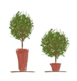 Pots with green tree for your design vector image
