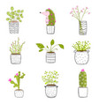 flowers in pots hand drawn vector image vector image