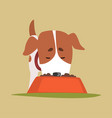 jack russell puppy character eating dog food cute vector image vector image
