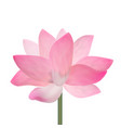 Realistic detailed pink lotus flower