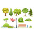 forest and park trees bushes fern and park bench vector image vector image