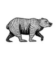 grizzly bear brown wild animal side view hand vector image vector image