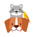 pets dog and cat canary bird vector image vector image