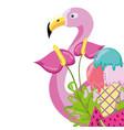tropical bird flamingo cartoon vector image