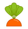 carrot grow isolated vegetable on garden bed vector image