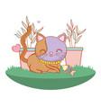kitty cat outdoors cartoon vector image