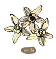 vanilla colorful flower isolated on the white vector image vector image