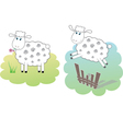 two white sheeps vector image