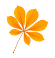 autumn chestnut leaf icon flat style vector image