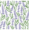 botanical seamless pattern with lavender flowers vector image