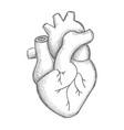 hand draw human heart sketch vector image