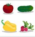 tomato cucumber pepper radish vector image vector image