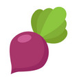 beet flat icon vegetable and diet vector image vector image