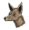 jackal vector image