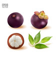 ripe mangosteen with leaves set isolated on vector image
